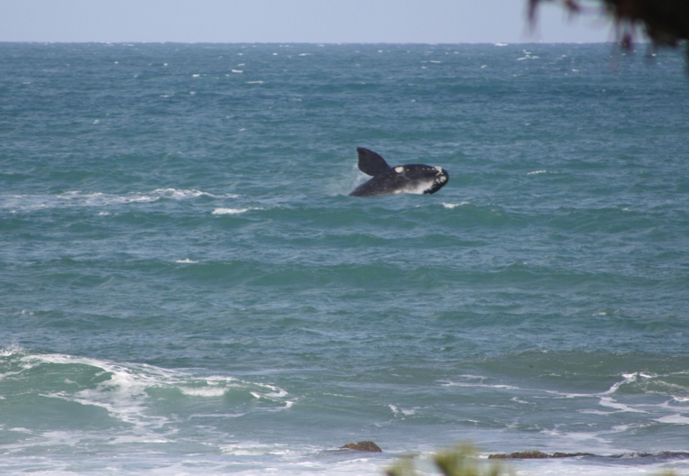 Winter, beach, whale, what more could you want?