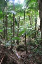 Tweed region rainforest