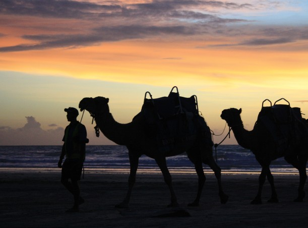 Broome camel ride