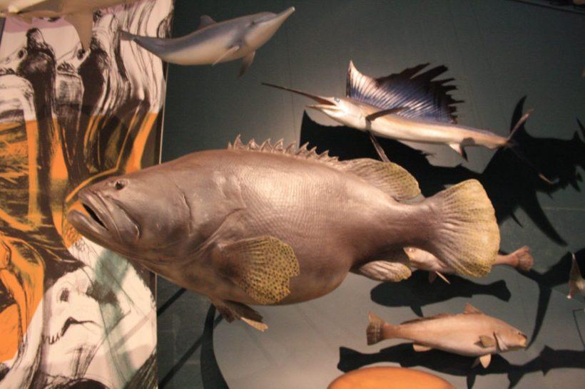 Darwin museum
