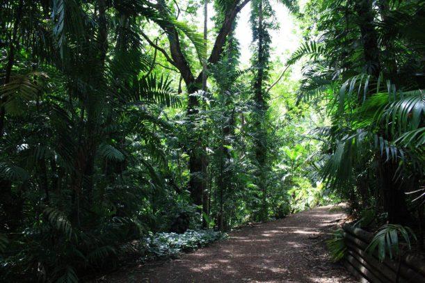 Darwin botanic garden