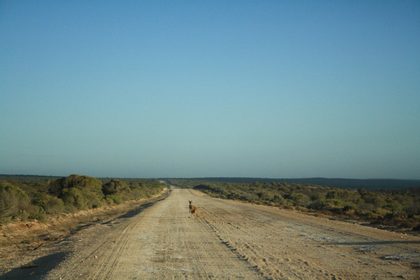 roo on the road