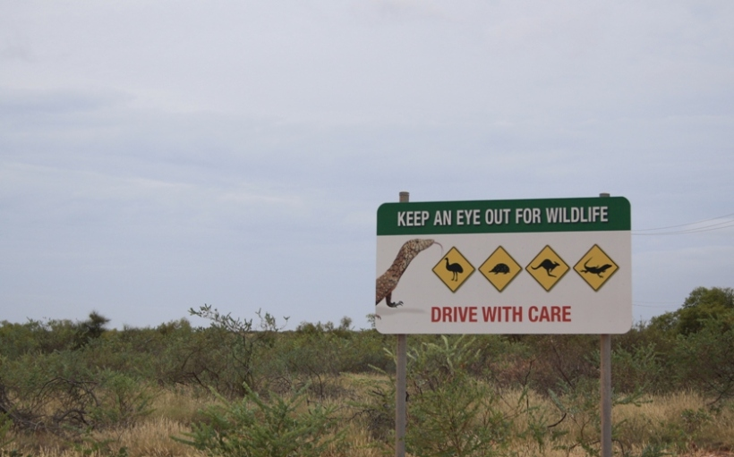watch out for wildlife Australia
