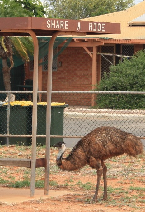 share a ride with an emu