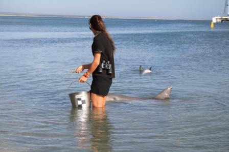Monkey Mia dolphins