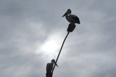 pelicans on light pole