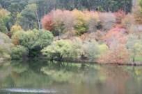 Adelaide Hills autumn colour