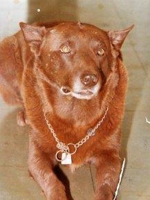 Red Dog, circa 1970s