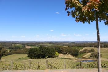 Hills winery