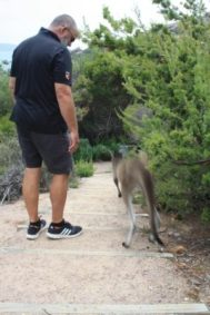 friendly kangaroo