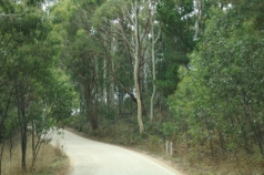 Hills roads