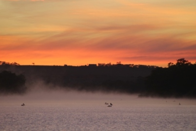 Morning Mist on the River Murray