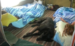 Annexe for kids and dog
