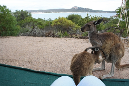 caravanning with roos