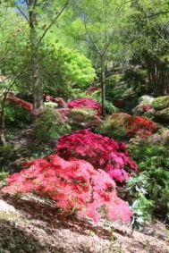 Rhododendron Gully