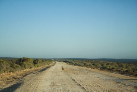 Aussie roads