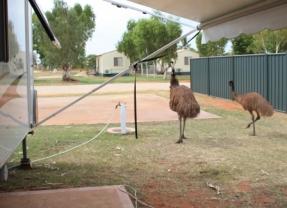 Emu visitors