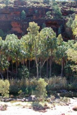 Palm Valley NT
