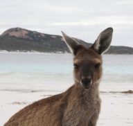 Welcome to Lucky Bay