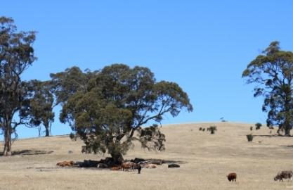 Australian farm