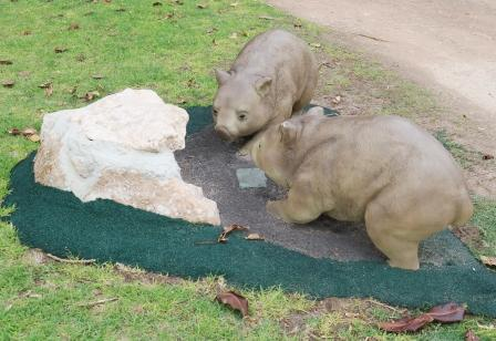 Wombats in Moonta