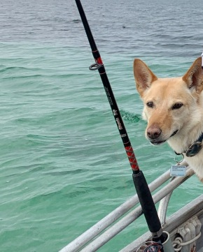 Fishing dog