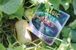 Magic little meals