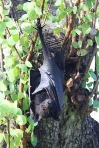 bat in the shade