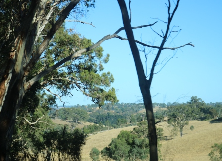 dry Australian landscape