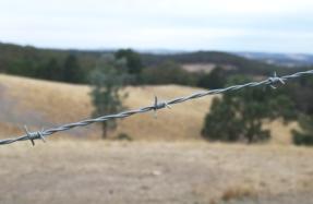 Australian farm in summer