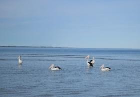 Marion Bay locals