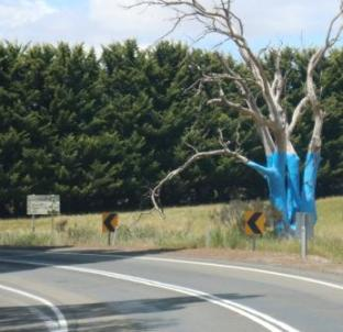 blue trees project