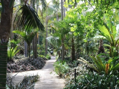 Jungle in Willunga