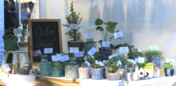 Plants at Goolwa market