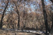 Woodside bushfire damage