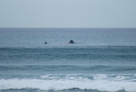 whale at Middleton Point