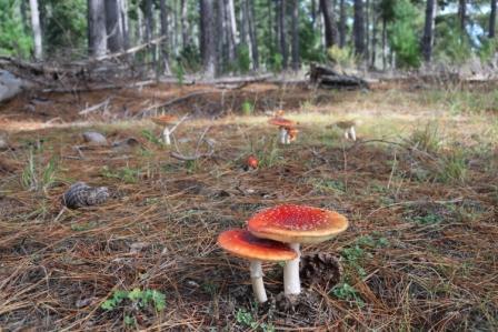 Kuitpo fungi