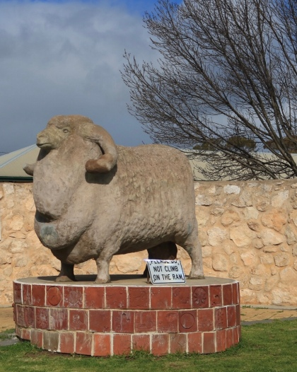 The big ram Karoonda