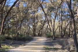 Lion Allan Thurmer Recreational trail